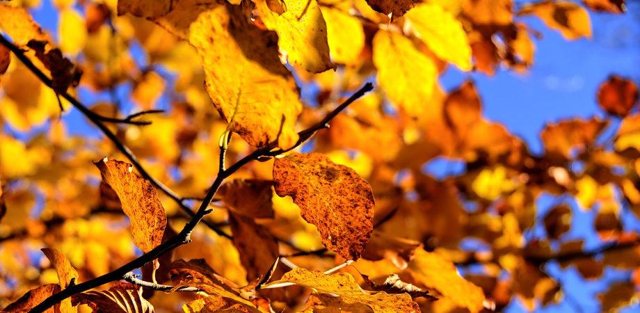 stimeo-jesien